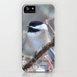 Chickadee in the Alder Tree iPhone Case