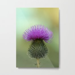Bright Purple and Green Thistle Metal Print