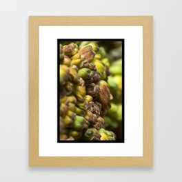SPROUT #2 Framed Art Print