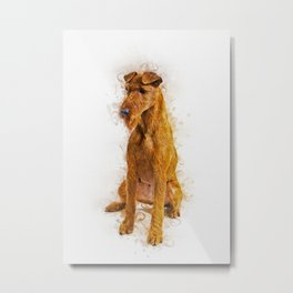 Irish Terrier Metal Print