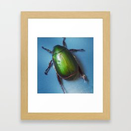 Jewelled beetle Framed Art Print