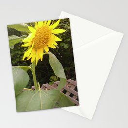 The Surviving Sunflower Stationery Cards