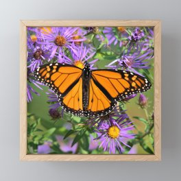 Monarch Butterfly on Wild Asters (square) Framed Mini Art Print