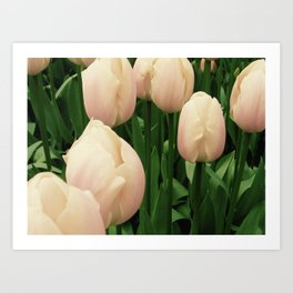 Tiny Tulips Art Print