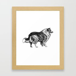 The Collie Framed Art Print