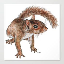 Twitchy-nosed Squirrel Canvas Print