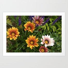 Colorful Gerbera Daisies Art Print