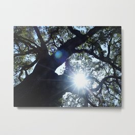 Legacy Oak Tree on the Grounds of Beringer Winery 2005 Metal Print