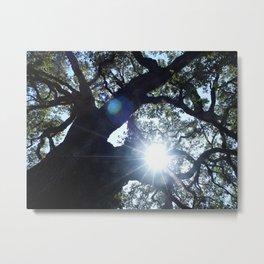 Legacy Oak Tree on the Grounds of Beringer Winery 2005 Metal Print