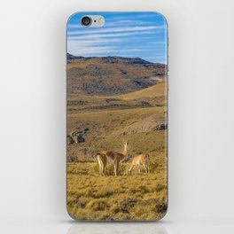 Group of Vicunas at Patagonia Landscape, Argentina iPhone Skin