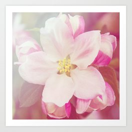 *Pinklight - Apple Blossom Art Print