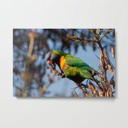 Rainbow Lorikeet Metal Print