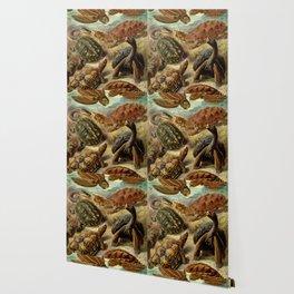 Sea Turtle Collage-Ernst Haeckel Wallpaper
