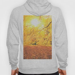 New York City Autumn Sun Hoody