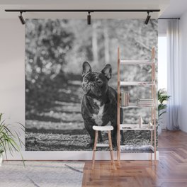 Monty the Frenchy Wall Mural