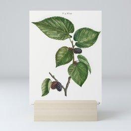 Weeping willow (Salix babylonica) from Traite des Arbres et Arbustes que lon cultive en France en pl Mini Art Print