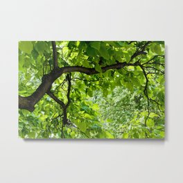 Peek into the Summer Trees Metal Print