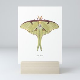 Luna Moth Mini Art Print