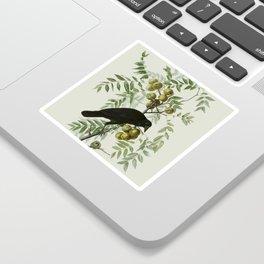 Vintage Crow Illustration Sticker