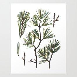 Pine Bough Art Print