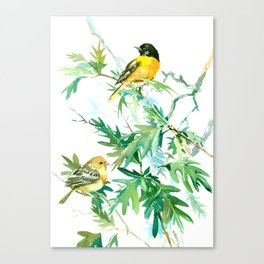 Baltimore Oriole Birds and White Oak Tree Canvas Print