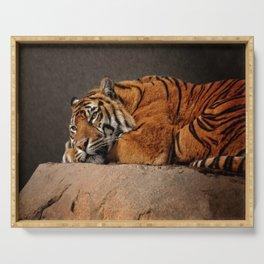 Resting Sumatran Tiger Serving Tray