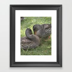 duck on meadow Framed Art Print