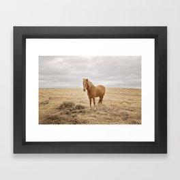 Solitary Horse in Color Framed Art Print