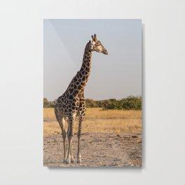 Giraffe II Metal Print
