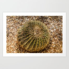 Big rounded cactus growing in Almeria Art Print