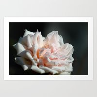 Hollywood Flower II  Art Print
