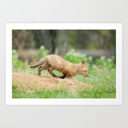 On The Move Baby Red Fox Animal Wildlife Photograph Art Print