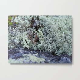 Moss texture Metal Print