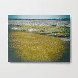 Marshes. Metal Print