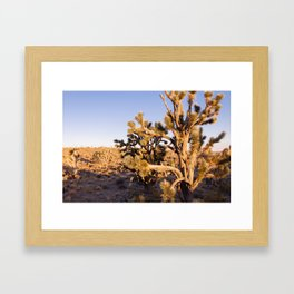 Joshua Trees at Sunrise Framed Art Print