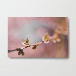 pink blossom 1 Metal Print