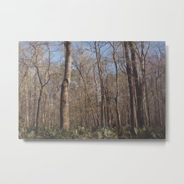 Florida Woods Metal Print