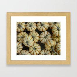 White pumpkins Framed Art Print