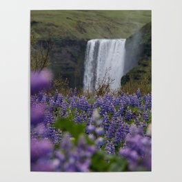 Skógafoss through the Lupines Poster