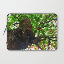 big tree with green leaves and red leaves Laptop Sleeve