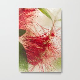 Weeping Bottlebrush Tree #14 Metal Print