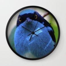 Blue Bird Watching Wall Clock