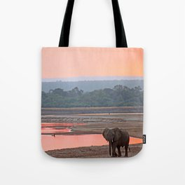 Walk in the evening light, Africa wildlife Tote Bag