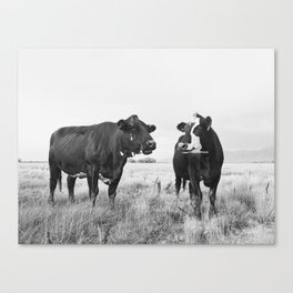 Cattle Photograph in Black and White Canvas Print