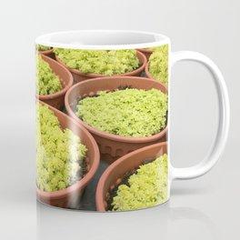 Close up shot of Mini Moss Pot at Cameron highlands Cactus Point . Coffee Mug