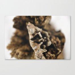 Brokentree Canvas Print
