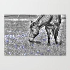 Horse & Bluebonnets Canvas Print