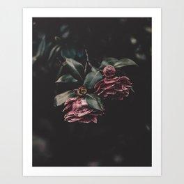 Camelia Flowers Art Print