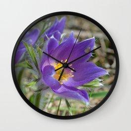 Purple Pasqueflower  Wall Clock