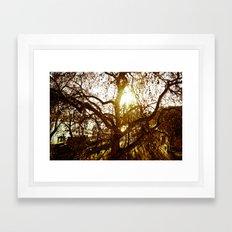 Tree see-through.... Framed Art Print